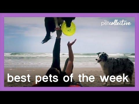 Fun On The Beach Video | Best Pets of the Week