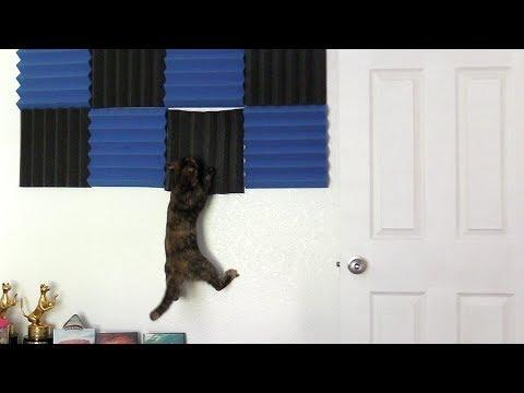 10 Funny Cat Clips!