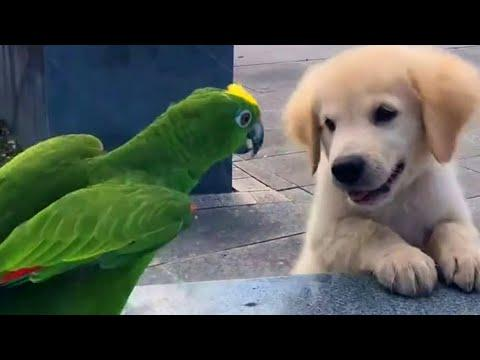 Cutest Golden Puppy and Parrot Duo Video  To Make Your Day