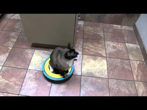 Cat On A Roomba Cleaning A Doctor's Office