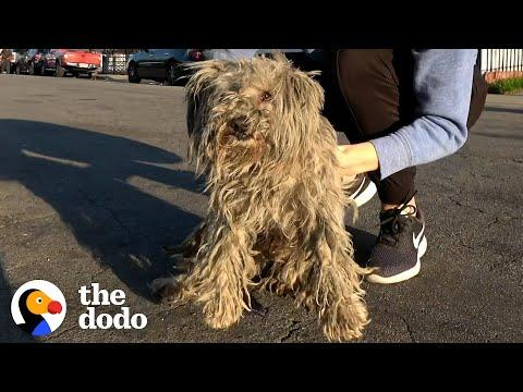 Matted Stray Dog Finally Gets A Haircut Video