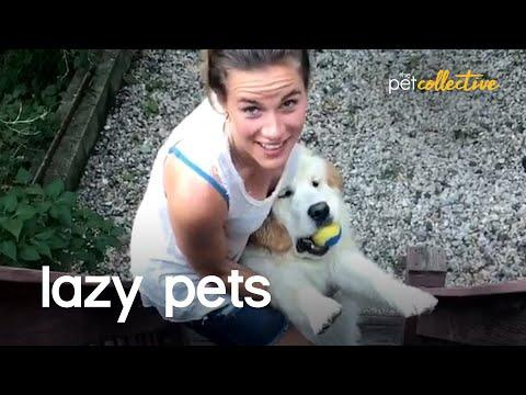 Are These The Laziest Pets On Planet Earth? Video.