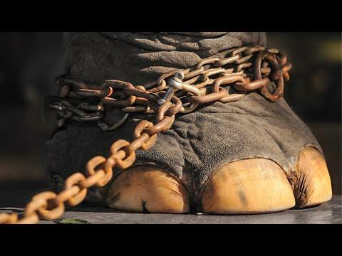 The Elephant Had Been Chained For 50 Years Video. Just Look What He Did After He Was Released!