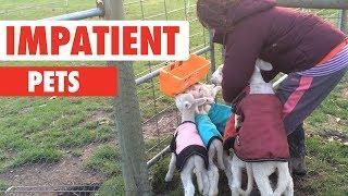 Impatient Pets