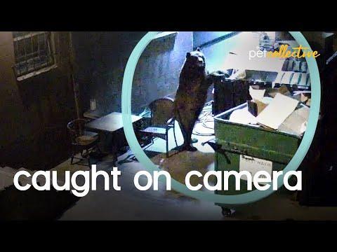 Animals Caught On Video!