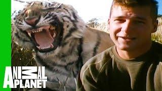Tigers Make Their First Kill And Prepare For Life In Africa | Living With Tigers