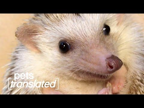 Best of Pets Translated (April 2021) #Video