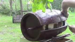 Bee swarm in an oak barrel