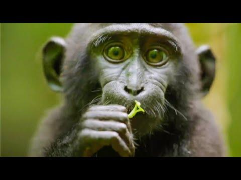 Best Monkey Moments Video | BBC Earth