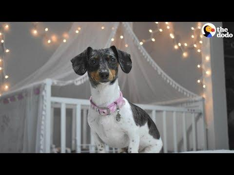 Dog Sleeps In Crib Every Single Night | The Dodo