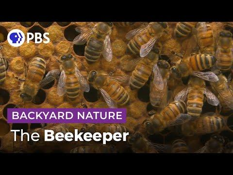 Keep Calm and... Tend to 20,000 Bees | Backyard Nature Video