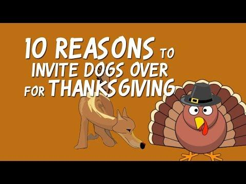 10 Reasons To Invite Dogs Over For Thanksgiving