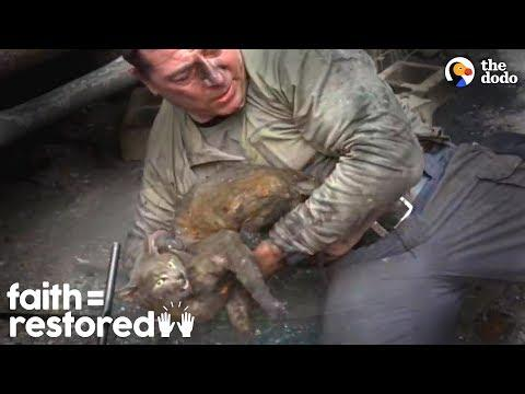 This Guy's A Hero To Families Who Lost Pets In Wildfire | The Dodo Faith = Restored