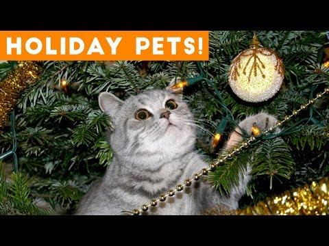Cutest Holiday Pets Compilation 2018 | Funny Pet Videos