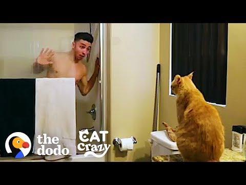 Every Cat Parent… | The Dodo Cat Crazy