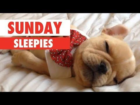 Sunday Sleepies