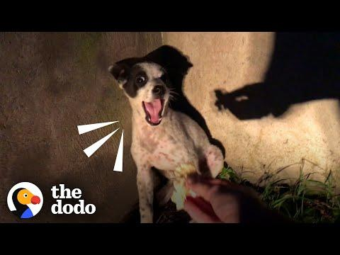 Rescuer Shares Her Lasagna With Crying Little Puppy Video | The Dodo