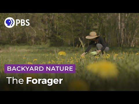 The Forager Video | Backyard Nature
