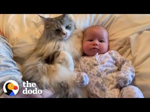 6 Stages Of A Cat Falling In Love With His Baby Sister Video| The Dodo