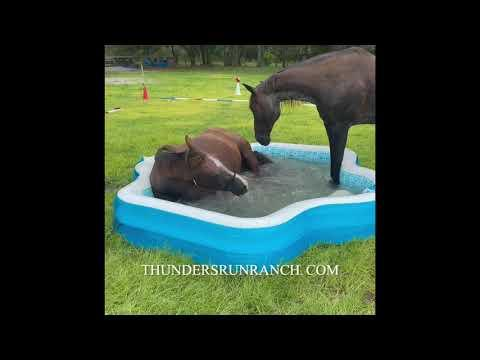 Two horses playing in an inflatable pool! #Video