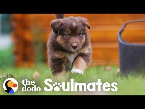 Dog Loves Running With His Mountain Biker Dad | The Dodo Soulmates