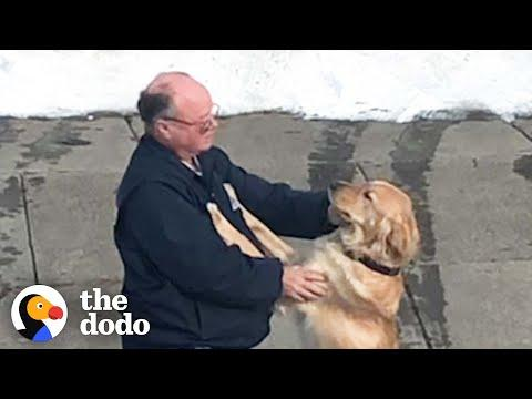 Dog And Mailman Have The Sweetest Relationship | The Dodo