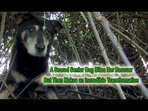 Dorothy: A Scared Senior Dog Bites Her Rescuer