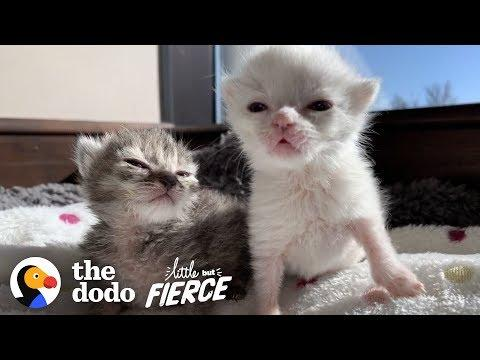 Cute Kitten Is Determined To Survive With Her Brother By Her Side | The Dodo Little But Fierce