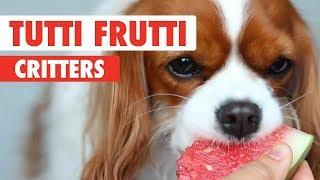 Tutti Frutti Critters