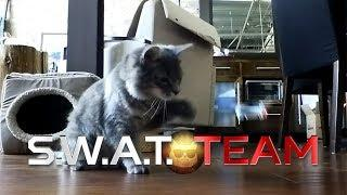 S.W.A.T. Team: Cat Edition!