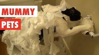 Mummy Pets | Funny Pet Video Compilation 2017