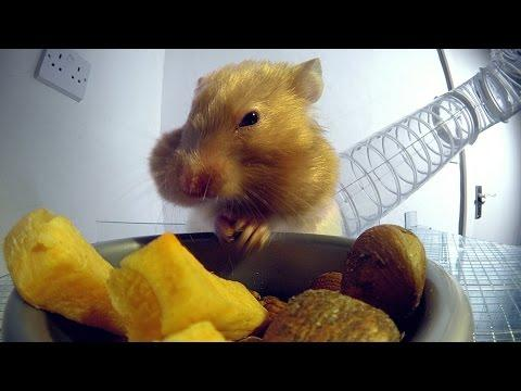 Inside A Hamster's Cheeks - Pets - Wild At Heart: Episode 1 Preview - BBC One