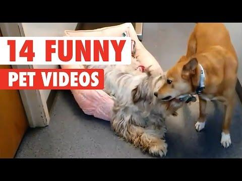 CORN KAT AND 13 MORE FUNNY ANIMAL VIDEOS!