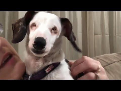 Blind, Deaf Dog Chirps Like A Bird To Get Attention. #Video