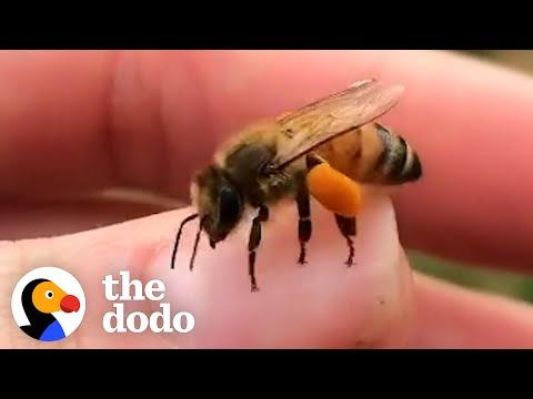 This Woman Loves To Hang Out With The Rescued Bees That Live In Her Backyard #Video
