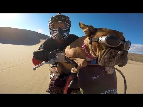 Lexus The Dirt Bike Dog