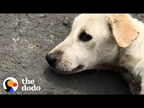 Dog Found Lying In Road Turns Into A Playful Puppy Video