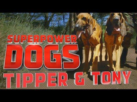 Filming Tipper and Tony, Saving endangered species in Kenya | Superpower Dogs