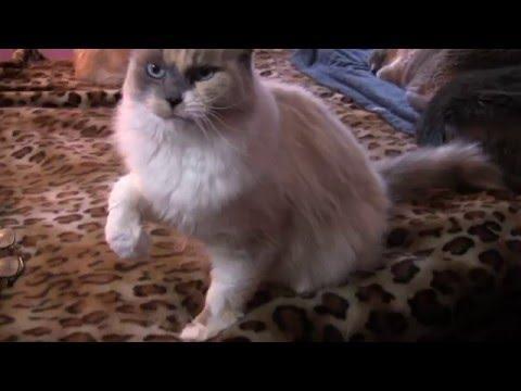 Lucky Cat Fairy Princess Beckoning