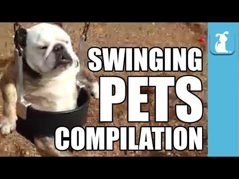 Hilarious Pets On Swings