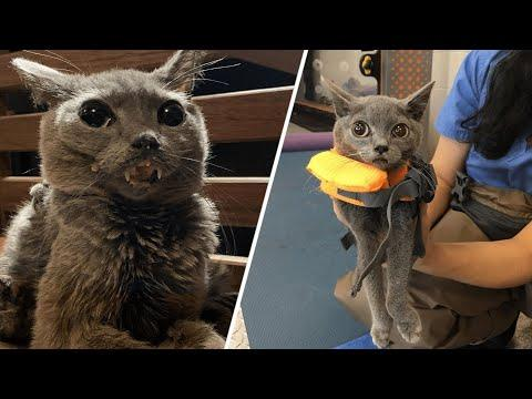 This couple had an epic response to their cat developing a mysterious condition #Video