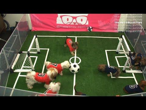 Puppies Play Soccer | Pup Cup 2019