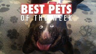 Best Pets of the Week | February 2018 Week 3