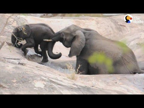 Elephant Mom Has Her Baby's Back No Matter What