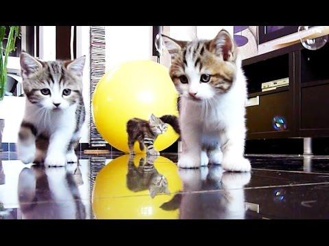 Cute Kittens Are Confused By Soap Bubbles