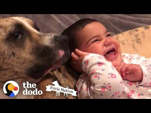 Little Girl Grows Up With Pit Bull In Sweetest Time Lapse Video