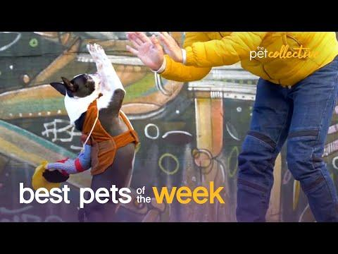 This Is Totally Pawsome | Best Pets of the Week Video