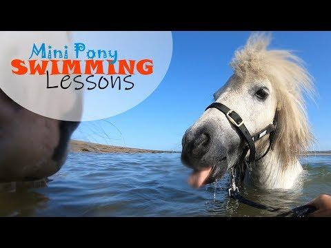 6 Mini Ponies have their First SWIMMING Lesson! | Training Video