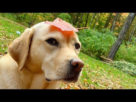 Stella's Most Pupular Leaf Pile Videos (So Far)