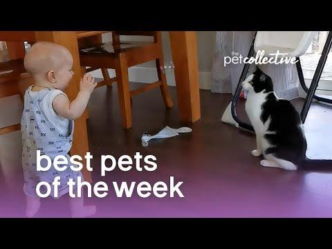 Best Pets Of The Week CAT AND BABY PLAYTIME | January 2020 Week 4
